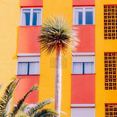 棕榈五颜六色的艺术。极小的海滩 tpopical 共鸣