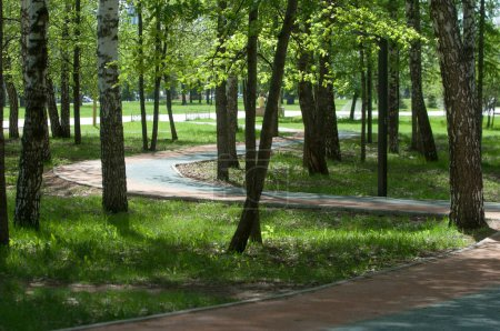 The area of the city park. Trails, trees and lush green grass.