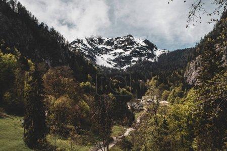 奥地利阿尔卑斯山山脉的壮丽景色,树木间小径_高清图片_邑石网