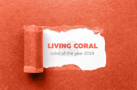torn sheet of paper on a white background in colors of the year 2019 living coral